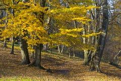 Dans le Central Park de Kaliningrad en automne image libre de droits