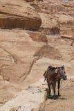 Dans le désert Images stock