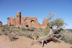 Dans le désert Photographie stock libre de droits