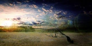 Dans le désert Photo libre de droits