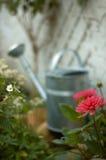 Dans le jardin Photographie stock libre de droits