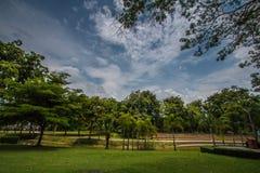 Dans le jardin avec le ciel bleu photographie stock