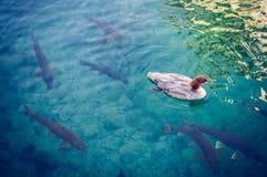 Dans le lac Photographie stock libre de droits