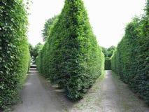 Dans le meilleur des cas arbres tondus géométriquement cultivés dans soigné abstrait Photos stock