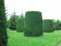 Dans le meilleur des cas arbres tondus géométriquement cultivés dans soigné abstrait photographie stock