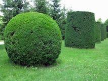 Dans le meilleur des cas arbres tondus géométriquement cultivés dans soigné abstrait image libre de droits