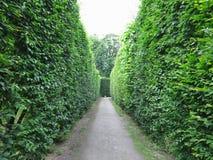 Dans le meilleur des cas arbres tondus géométriquement cultivés dans soigné abstrait photo stock