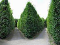 Dans le meilleur des cas arbres tondus géométriquement cultivés dans soigné abstrait image stock