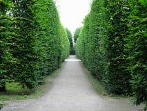 Dans le meilleur des cas arbres tondus géométriquement cultivés dans soigné abstrait images libres de droits