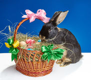 Dans le panier avec des oeufs de pâques essayant de monter le lapin curieux Image stock