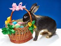 Dans le panier avec des oeufs le lapin jette un coup d'oeil Photographie stock libre de droits