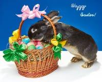 Dans le panier de Pâques essayant de monter le lapin Photos libres de droits
