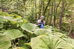 Dans le photographe de touristes de forêt pittoresque de peuplement vieux faisant les images uniques images stock