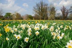 Dans le printemps Images stock