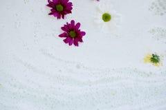 Dans le sein blanc de l'eau, des marguerites de bain en fleurs blanches, pourpres et jaunes L'atmosphère de la relaxation et du b Photos libres de droits