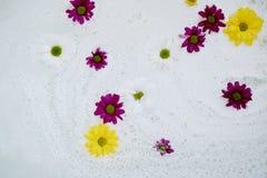 Dans le sein blanc de l'eau, des marguerites de bain en fleurs blanches, pourpres et jaunes L'atmosphère de la relaxation et du b Images stock