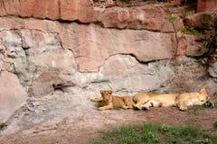 Dans le zoo photographie stock