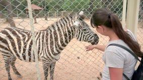 Dans le zoo dans le pré est un beau zèbre, une fille de touristes monte à elle et la frotte au-dessus de la barrière clips vidéos