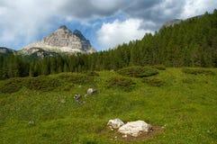 Dans les Alpes de dolomite Image libre de droits