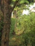 Dans les arbres image libre de droits