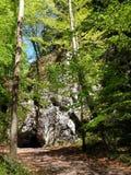 Dans les bois Photographie stock