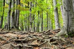 Dans les bois Photos libres de droits