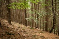 Dans les bois Images libres de droits