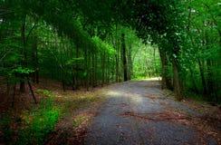 Dans les bois Photo libre de droits