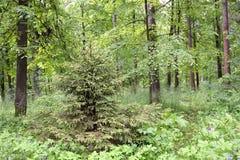 Dans les bois Image stock