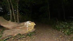 Dans les bois photo stock