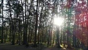 Dans les bois photos stock