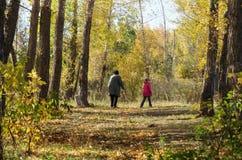 Dans les bois pour des champignons Photo stock