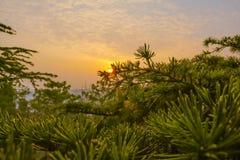 Dans les bras du coucher du soleil Images stock