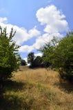 Dans les collines Image libre de droits