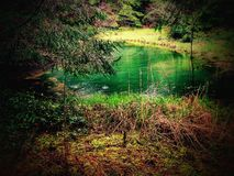 dans les forêts de l'Orégon Images libres de droits