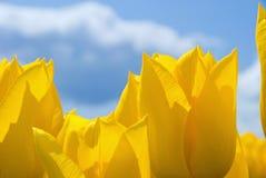 Dans les tulipes Photographie stock libre de droits