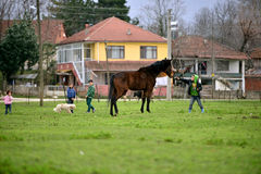 Dans les zones rurales, enfants qui aiment des animaux Photographie stock libre de droits