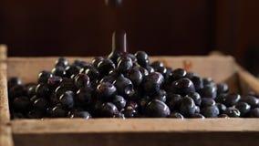 Dans un conteneur en bois remplir raisins foncés Fin vers le haut banque de vidéos