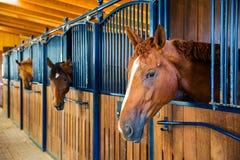 Dans une ferme de cheval Image libre de droits