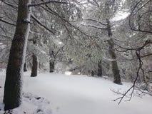 Dans une forêt blanche photo libre de droits