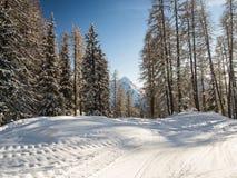 Dans une forêt d'hiver Photo libre de droits