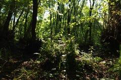 Dans une forêt fabuleuse de relique Photos stock