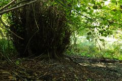 Dans une forêt fabuleuse de relique Photo libre de droits