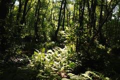 Dans une forêt fabuleuse de relique Image libre de droits