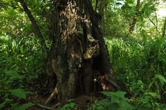 Dans une forêt fabuleuse de relique Photographie stock