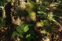 Dans une forêt fabuleuse de relique Images libres de droits