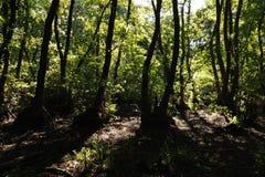 Dans une forêt fabuleuse de relique Photos libres de droits