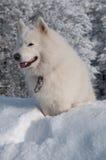 Dans une pile de neige Photographie stock