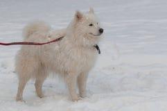Dans une tempête de neige Images libres de droits