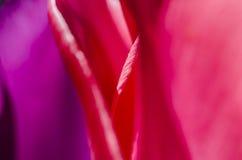 Dans van bloemblaadjes Royalty-vrije Stock Fotografie